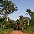 Jungel Congo by Rune Monstad