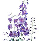 purple blue pink delphinium watercolor  by ColorandColor