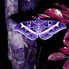 Moth in Purple by LoraMaze