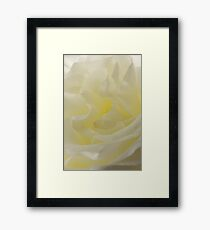 Soft white petals Framed Print
