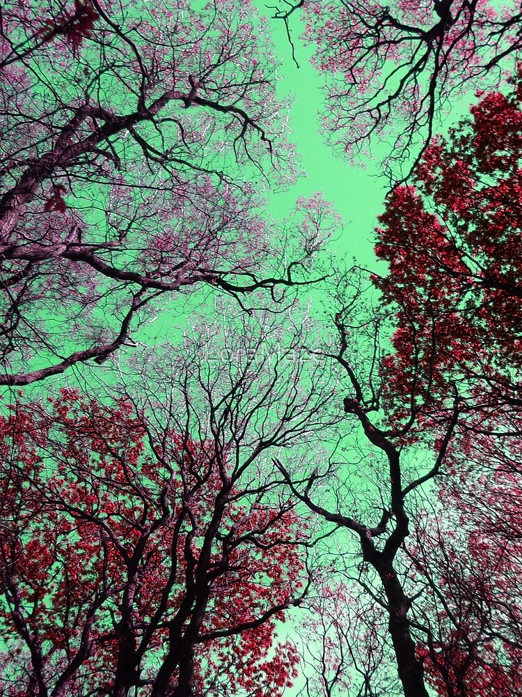 Sky in Green by LoraMaze