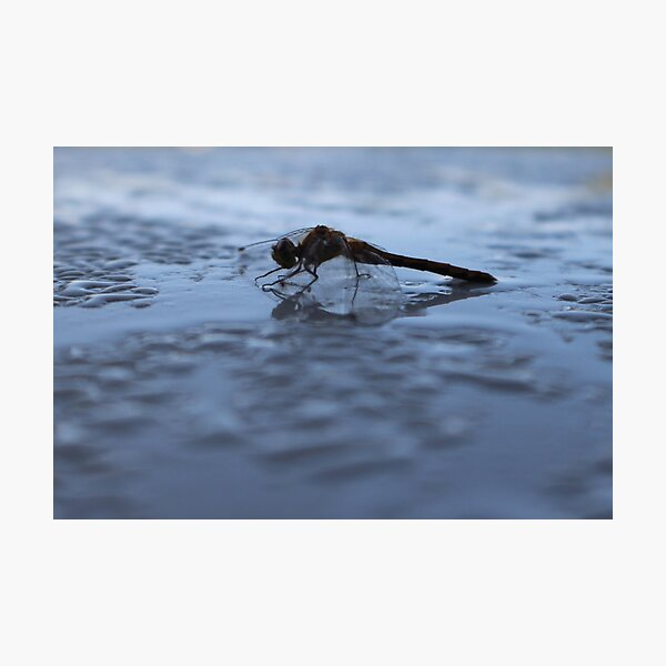 Gimli Dragonfly 2 Photographic Print