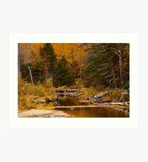 Autumn By a Woodland Stream Art Print