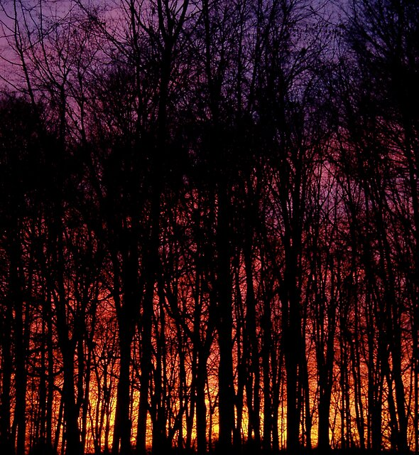 Technicolor Trees by Whitney Edwards