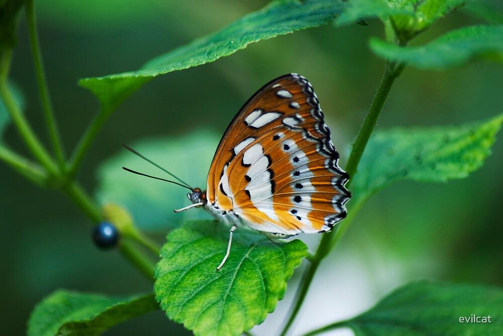 Orange butterfly by evilcat