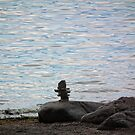 Mini totem by the water by marchello