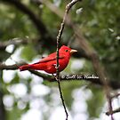 Oklahoma Male Summer Tanager Bird by Scott Hawkins