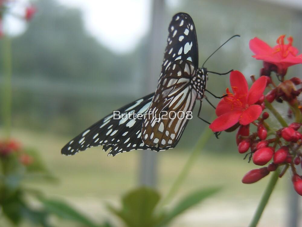 Glasswing Beauty by Butterfly2008