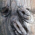Dog Wood? by Detlef Becher