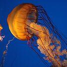 Jellyfish by Karl R. Martin