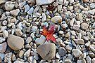 A Hint of Fall by Sun Dog Montana