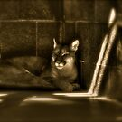 Another Melancholy Cat by Tim Wright