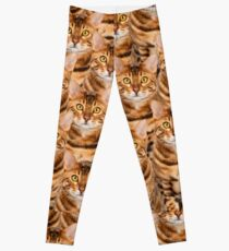 Spectacular Bengal Kitten Design Leggings