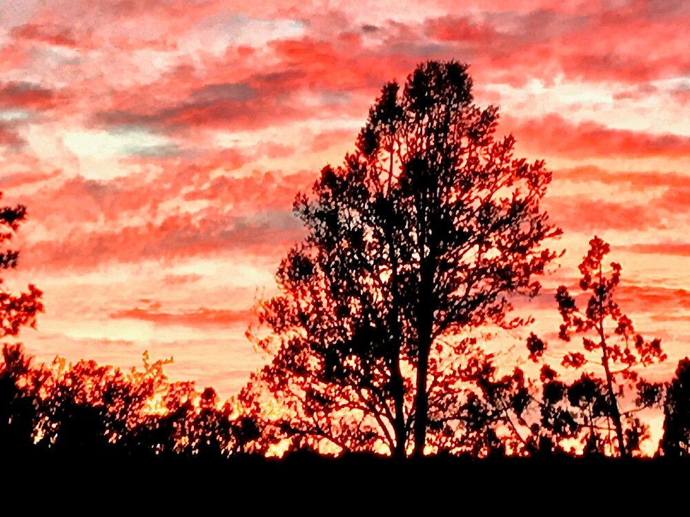 Arizona Pine Fiery Sunset by EricaRobbin