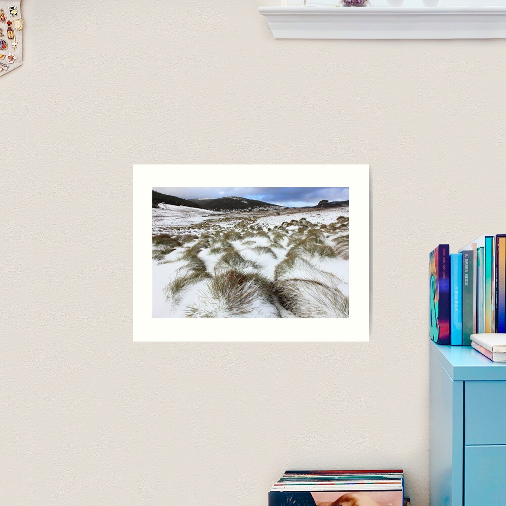Grass Tussocks, Cradle Mountain National Park, Tasmania, Australia Art Print