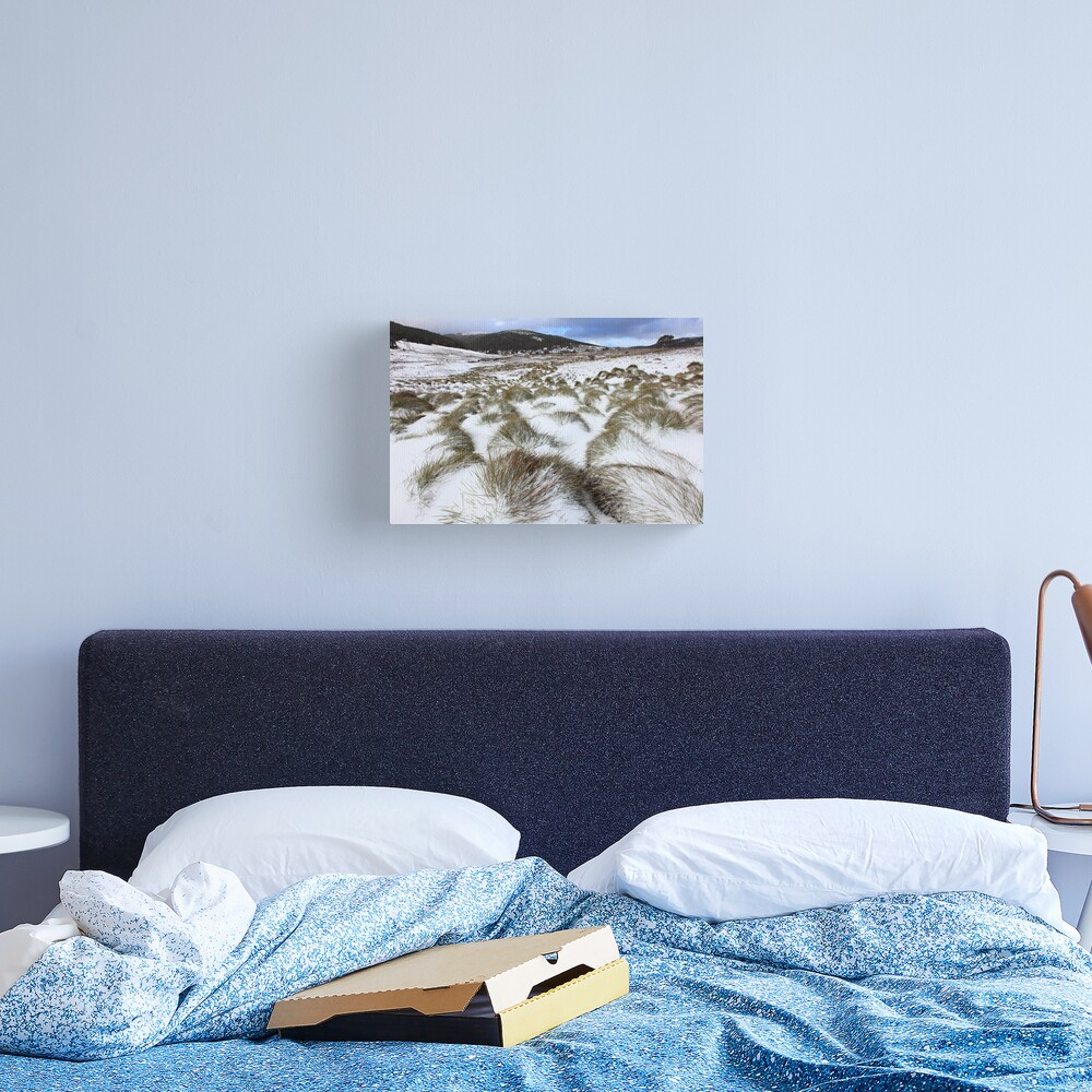 Grass Tussocks, Cradle Mountain National Park, Tasmania, Australia Canvas Print