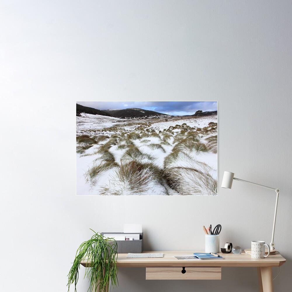 Grass Tussocks, Cradle Mountain National Park, Tasmania, Australia Poster