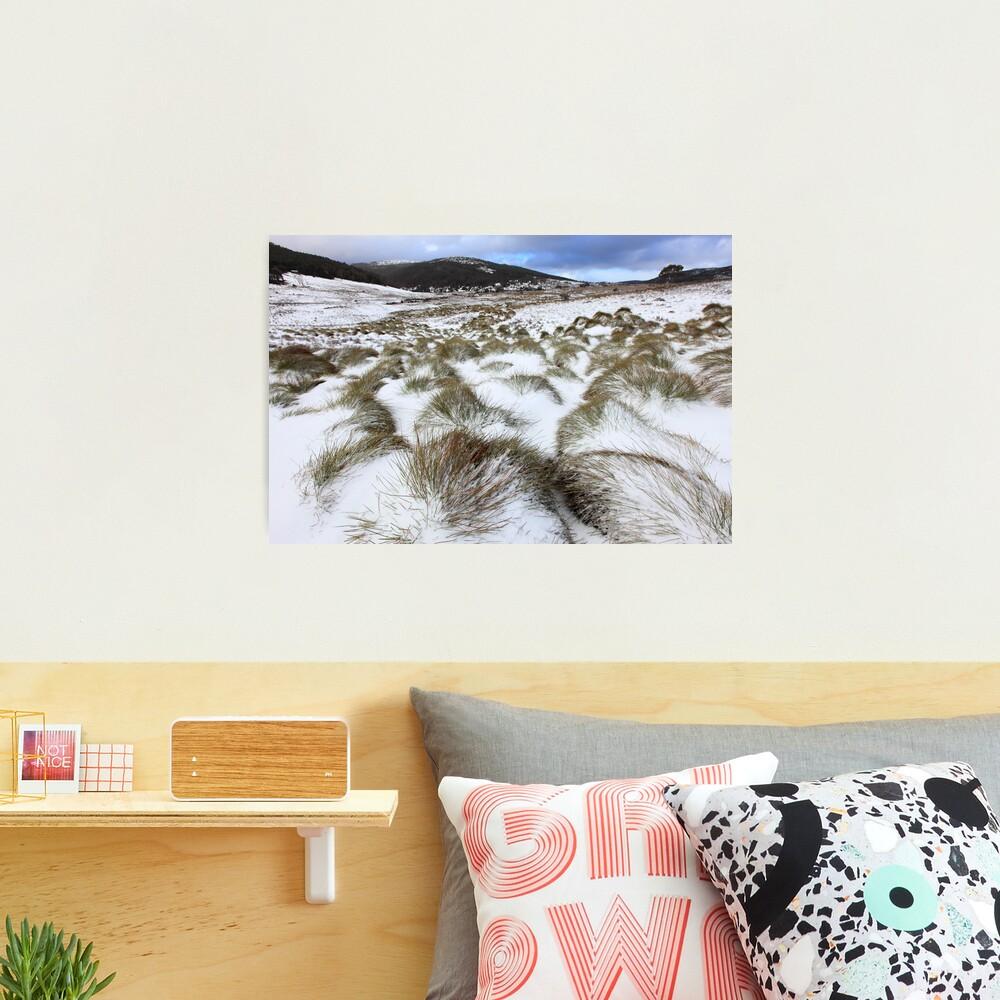 Grass Tussocks, Cradle Mountain National Park, Tasmania, Australia Photographic Print