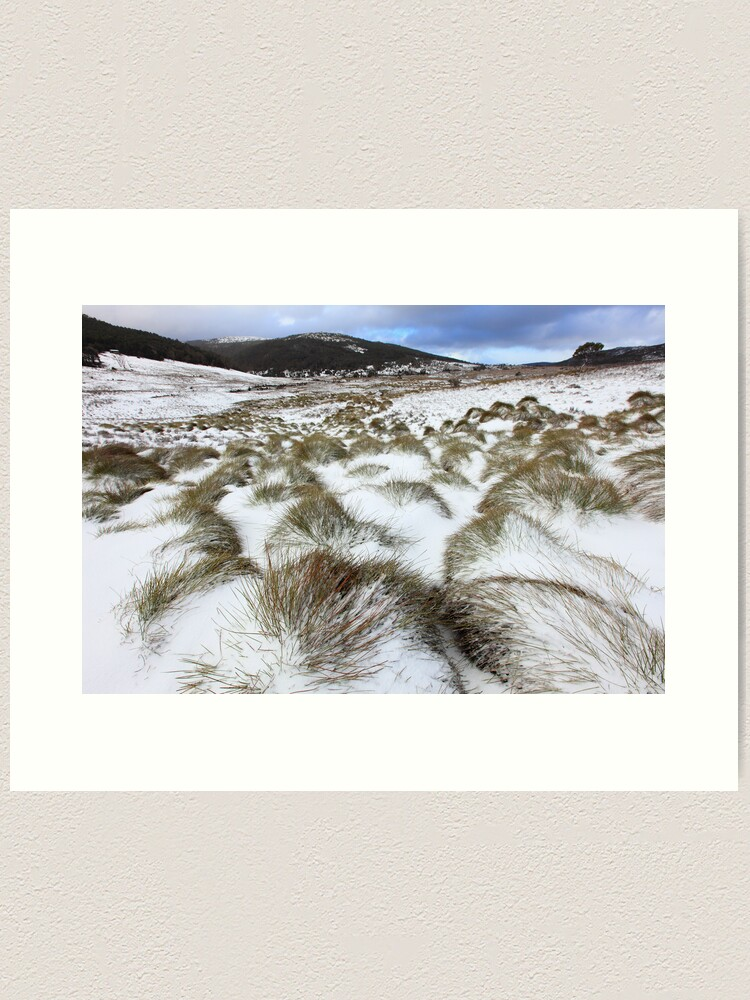 Alternate view of Grass Tussocks, Cradle Mountain National Park, Tasmania, Australia Art Print