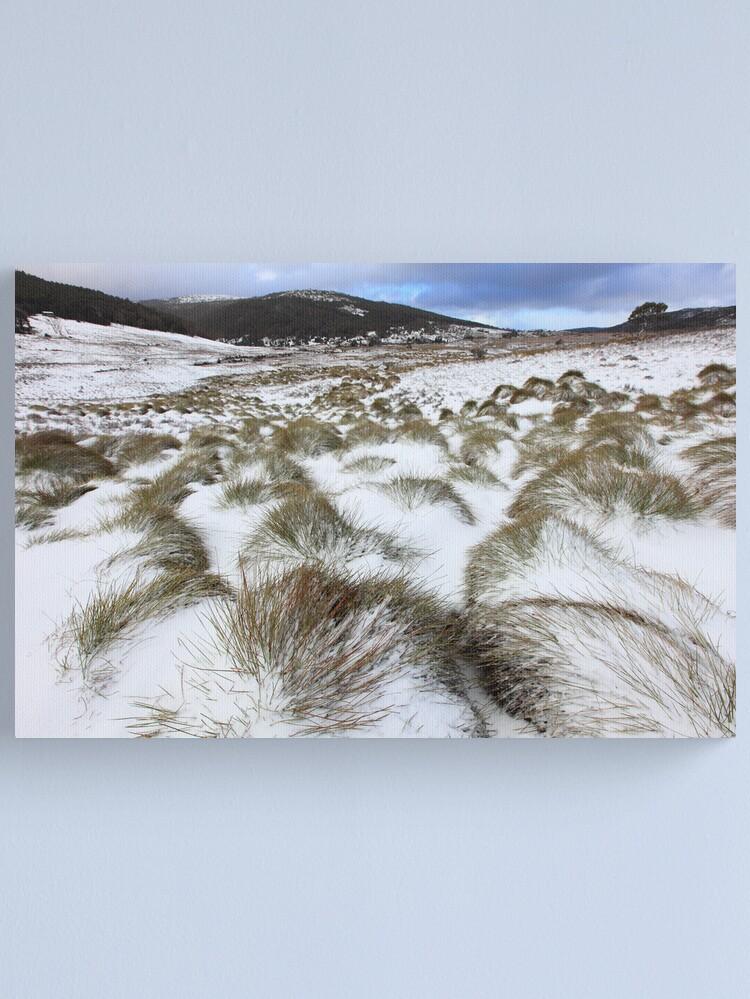 Alternate view of Grass Tussocks, Cradle Mountain National Park, Tasmania, Australia Canvas Print