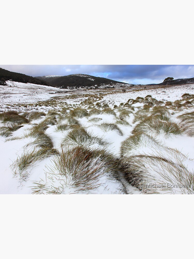 Grass Tussocks, Cradle Mountain National Park, Tasmania, Australia by Chockstone