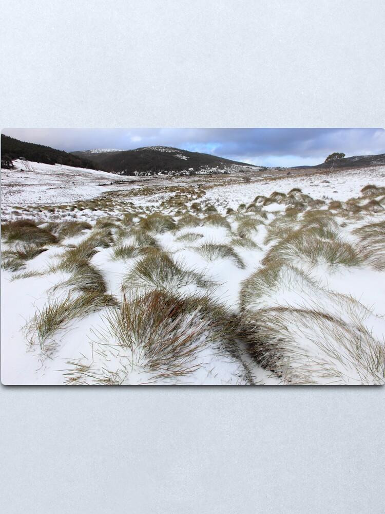 Alternate view of Grass Tussocks, Cradle Mountain National Park, Tasmania, Australia Metal Print