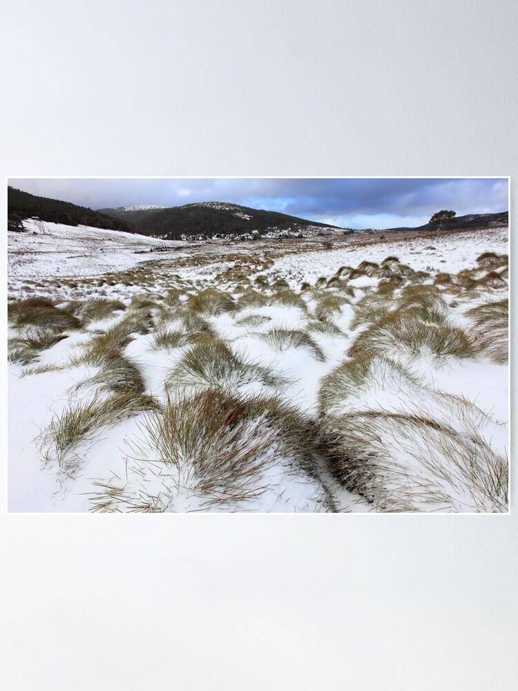 Alternate view of Grass Tussocks, Cradle Mountain National Park, Tasmania, Australia Poster