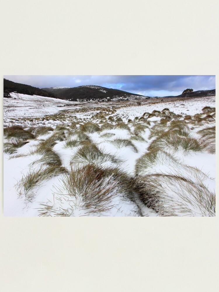 Alternate view of Grass Tussocks, Cradle Mountain National Park, Tasmania, Australia Photographic Print