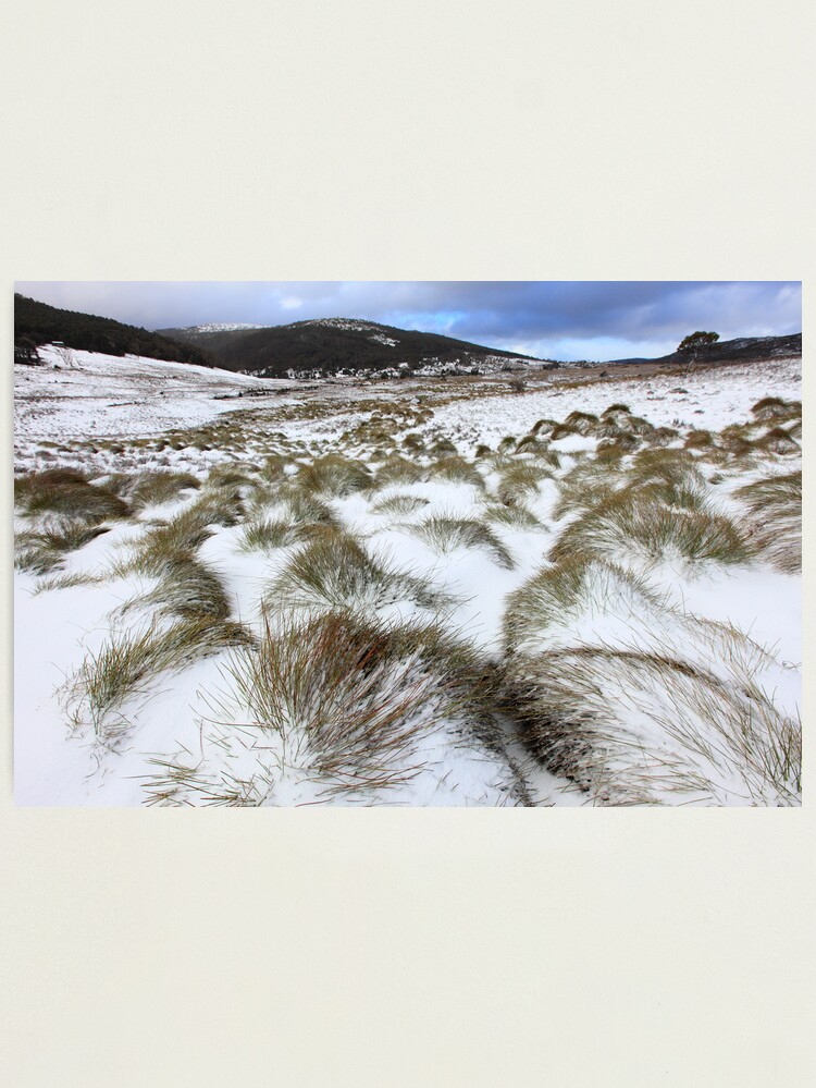 Alternate view of Grass Tussocks, Cradle Mountain National Park, Tasmania, Australia Photographic Print