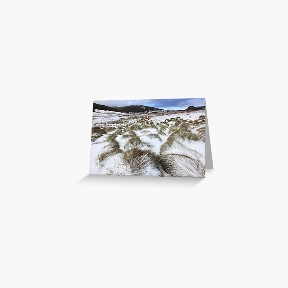 Grass Tussocks, Cradle Mountain National Park, Tasmania, Australia Greeting Card