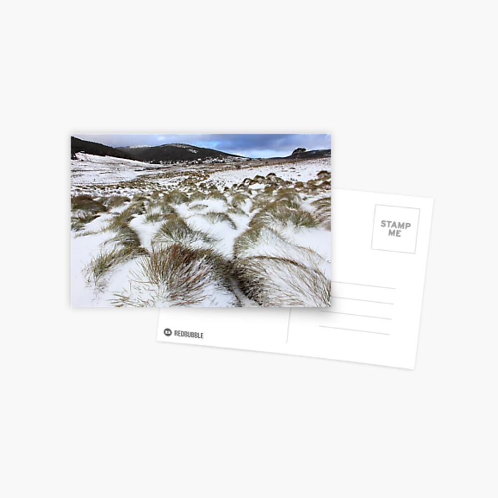 Grass Tussocks, Cradle Mountain National Park, Tasmania, Australia Postcard