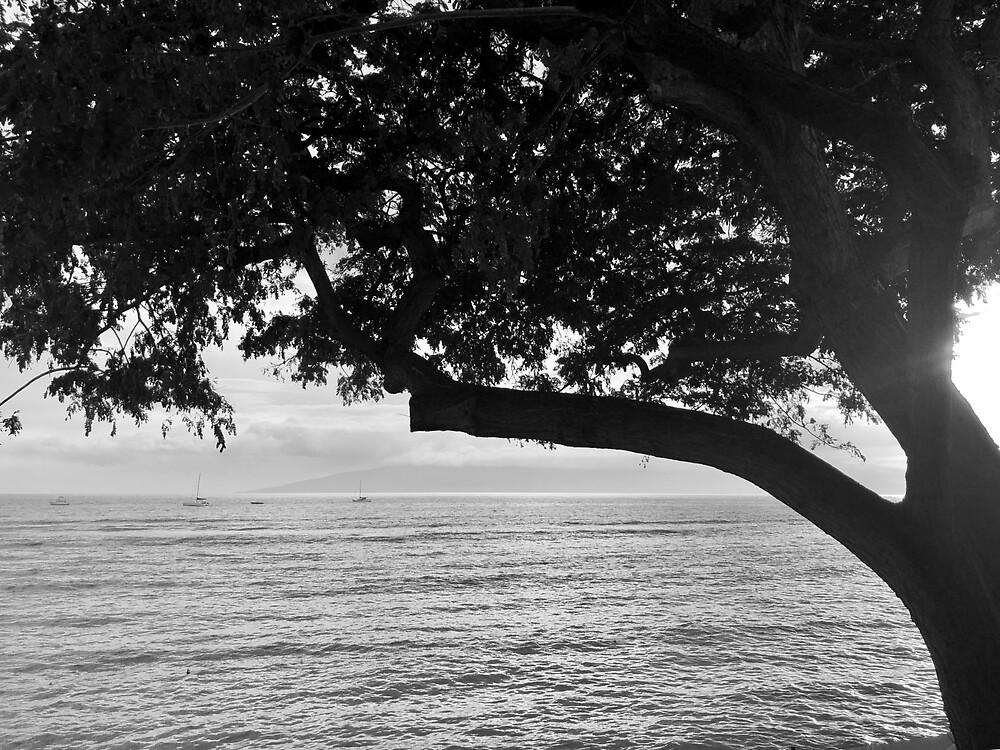 Lahaina Sunset with Tree B/W by EricaRobbin