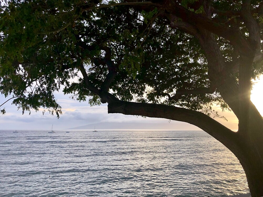 Lahaina Sunset with Tree in Color by EricaRobbin