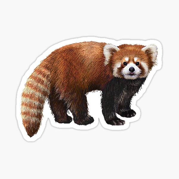 red panda cute boi sticker Sticker