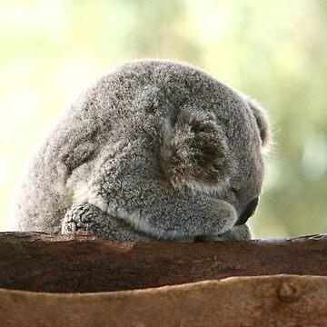 Sleeping koala by yelys