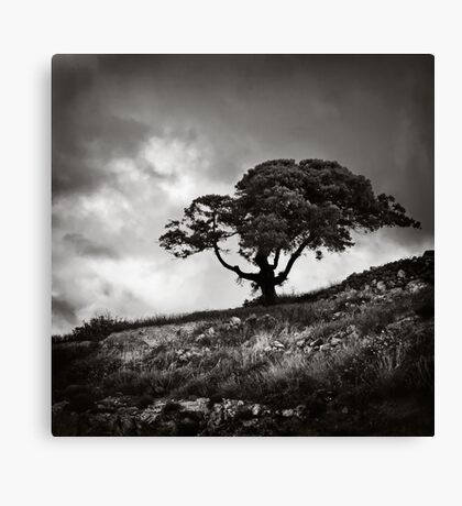 A tree Canvas Print