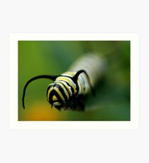 Face to face with a Monarch Caterpillar Art Print