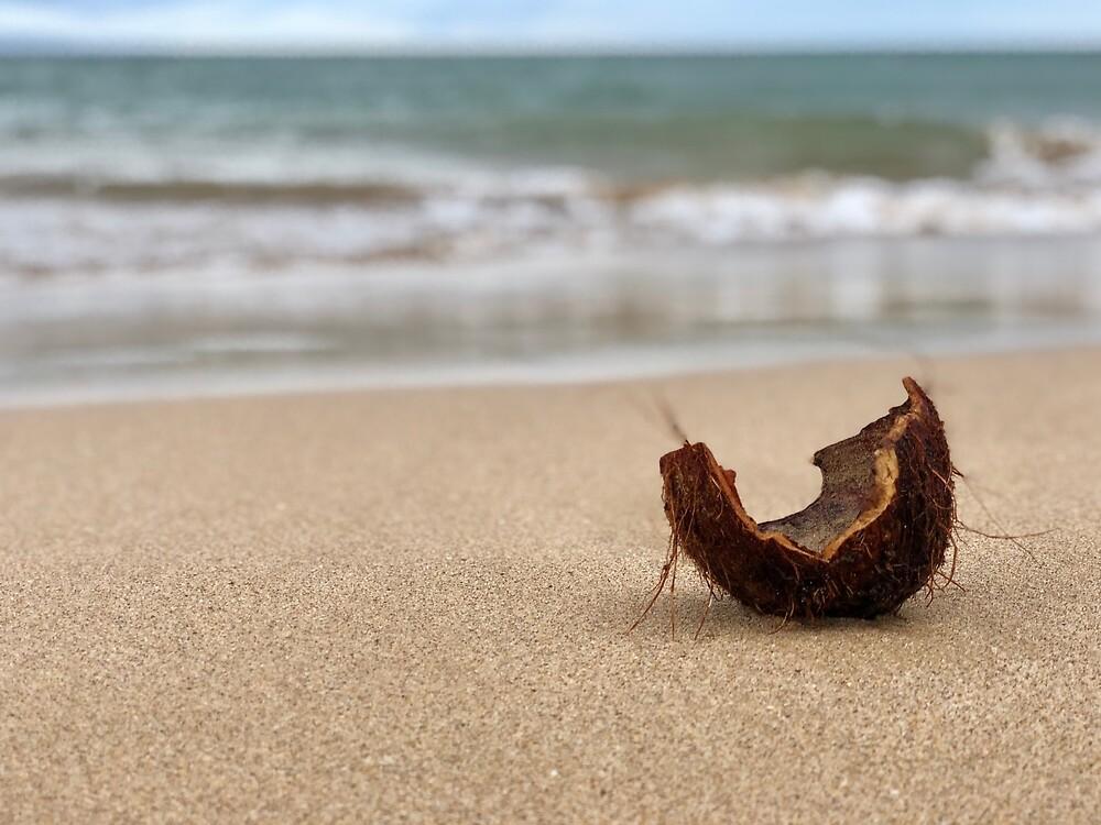 Coconut Shell on Maui Beach by EricaRobbin