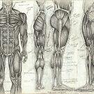 Human Anatomy 2 by Tara Hale