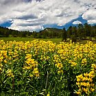 Yellow Flowers by Valentina Gatewood