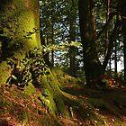 In The Dark, Dark Woods by Alexandra Lavizzari