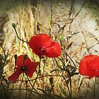 Kos Poppies by Carol Bleasdale
