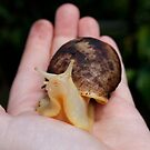 Snail in Granddaughters Hand  by AnnDixon