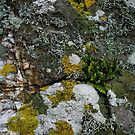 Natural Rock Texture with Lichens, Ferns, and Moss by LoraMaze