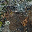 Natural Coastal Rock Texture with Lichen and Moss by LoraMaze