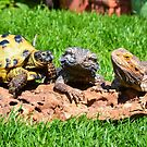 My Reptile Family by Carla Maloco