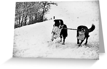 Snow Fun by Lindamell
