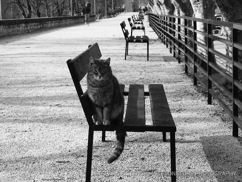 """6.00 AM en Provence"" by STEPHANIE STENGEL   STELONATURE PHOTOGRAPHY"