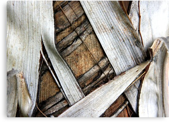 Palm Bark Series 2 by Haydee  Yordan