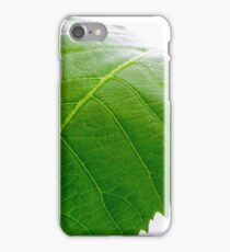 Baby Pecan  iPhone Case/Skin